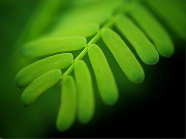 Las propiedades de las hojas se pueden desvelar con ultrasonidos.