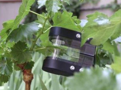 Vine_leaf